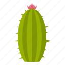 bloom, blooming, blossom, cactus, flower, mammillaria, succulent icon