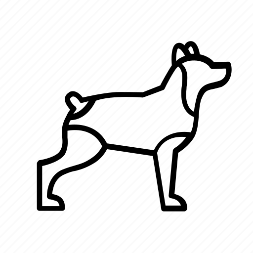 animal, care, clothes, dog, pet icon