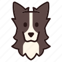 border collie, breed, collie, dog, pedigree, pet, purebred