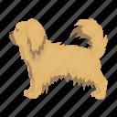 breed, dog, mammal, pekingese, pet icon