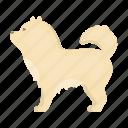 breed, dog, mammal, pet