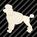 breed, dog, mammal, pet, poodle icon