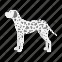 breed, dalmatian, dog, mammal, pet icon