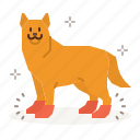 dog, care, foot, protection, boots, socks, shoes icon