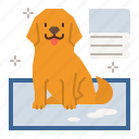 dog, care, puppy, pet, pee, sheets, pads