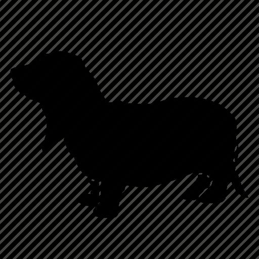 adorable, animal, basset, dog, hound, pet, small icon