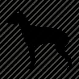 animal, dog, english, fierce, menacing, terrier, toy icon
