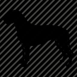 alpen, animal, dog, fast, pet, schatz, schaussi icon
