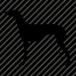 dog, fast, greyhound, pet, race, spanish, speed icon