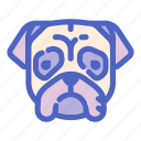 animal, canine, dog, dogs, face, pet, pug