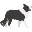 border collie, dog, herding, scottish, sheep, sheepdog icon