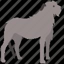 breed, dog, hound, hunting, irish, wolf, wolfhound icon