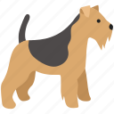 airedale, border, dog, pet, scottish, terrier, wire fox icon