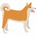 akita, breed, dog, husky, inu, japanese, ken icon
