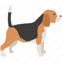 beagle, dog, foxhound, hound, hunting, scent icon