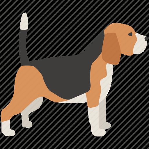 beagle, dog, foxhound, hound, hunting, scent icon