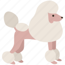 breed, canine, dog, pet, poodle, show, toy icon