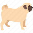 bulldog, canine, dog, house, pet, pug icon