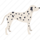breed, canine, dalmation, dog, hound, pet, spotted icon