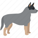 australian, cattle dog, farm, herding, livestock, working icon
