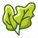agriculture, farming, plant, spinach, vegetable icon