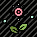 flower, plant, rose, spring