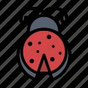 bug, insect, ladybug, spring icon