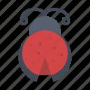 bug, insect, ladybug, spring