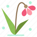 decoration, easter, plant, tulip