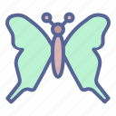 butterfly, easter, spring, summer icon