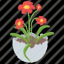 blossom, flower, flower vase, nature, spring flower