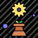 flower, leaves, nature, plant, pot
