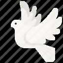 dove, pigeon, bird, wings, animal