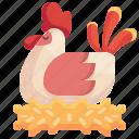 hen, poultry, chicken, animal, farm