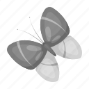 butterfly, attribute, insect, easter, spring icon