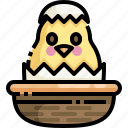 animals, bucket, chick, chicken, easter, egg, season