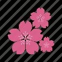 plant, ecology, eco, culture, flower, sakura, sakuraculture, flowers
