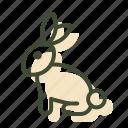 animal testing, rabbit, cruelty free, vegan