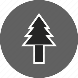 pine tree, plant, tree icon