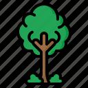 tree, ecology, green, environment, eco