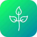 ecology, environment, leaf, nature, plant