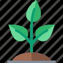 green, grow, growing, plant, soil