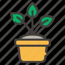 plant, pot, green, leaf, nature, flower, floral