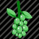 grape, environment, fruit, green, nature, ecology, food