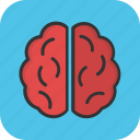 brain, brainstorming, human brain, intelligence, organ icon