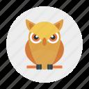 animal, education, knowledge, owl, school icon