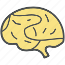 anatomy, brain, intelligence, invention, mind, strategy, think symbol icon