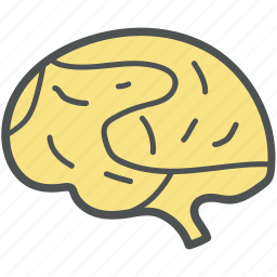 anatomy, brain, intelligence, invention, mind, strategy, think symbol icon
