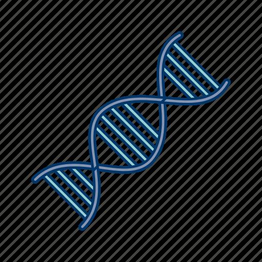 chain, dna, genetics, link icon