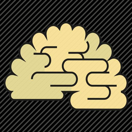 brain, clever, intelligent, organ, think, wise icon